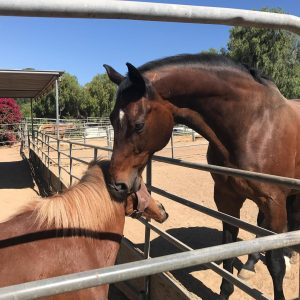 Courtship Ranch, Hollywood, horse boarding, Burbank, Sylmar, horse training, horse stable, San Fernando, riding lessons, LA