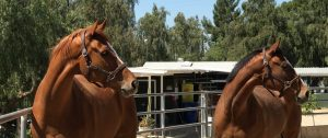 Courtship Ranch, Lake View Terrace, Hollywood, horse boarding, Burbank, Sylmar, horse training, horse stable, San Fernando, riding lessons, LA