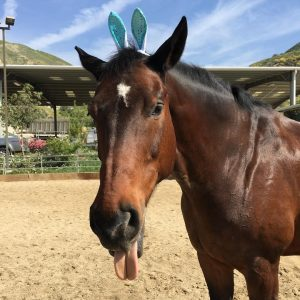 horse boarding in Sylmar LA, Courtship Ranch, horse boarding, Burbank, Sylmar, horse training, riding lessons, LA