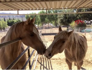 Courtship Ranch, Hollywood, horse boarding, Burbank, Sylmar, horse training, riding lessons, LA