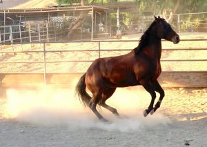 affordable Los Angeles horse boarding