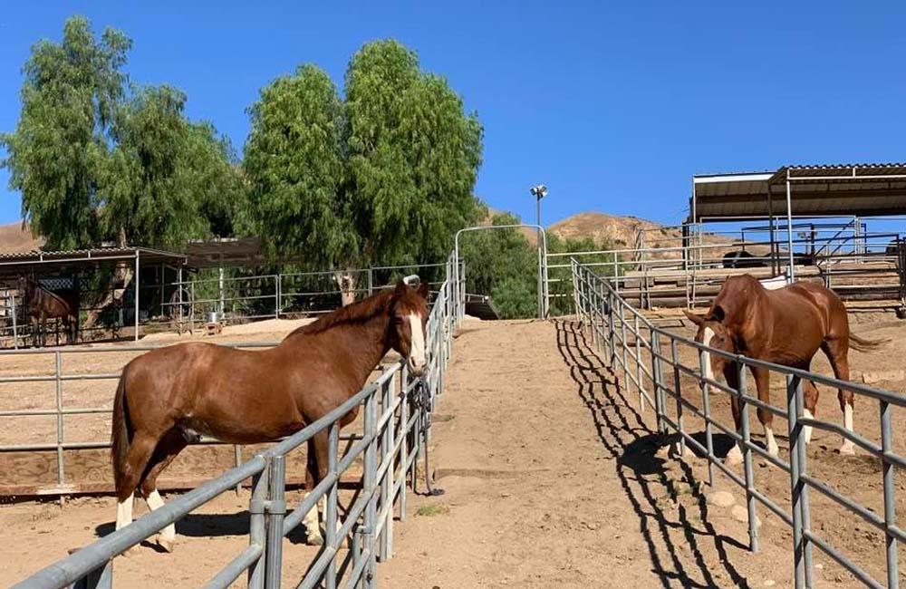 shadow hills horse boarding-363